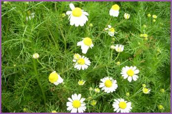 2011-04-119_convert_20110411193856.jpg