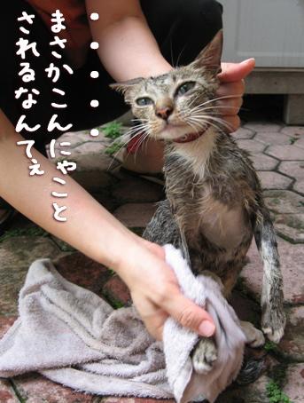 アミーゴお風呂1