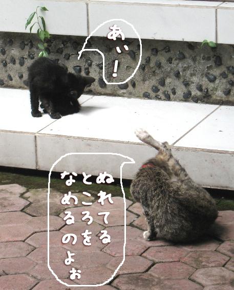 アミーゴ&む~たん舐め猫に