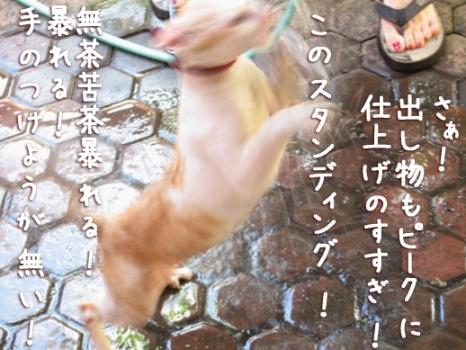 暴れ猫?1