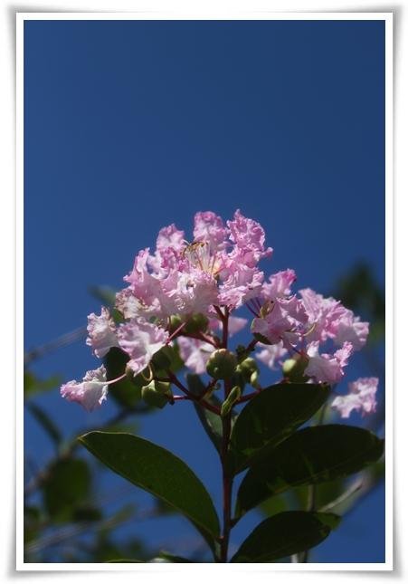 IMG_3690ピンクの花
