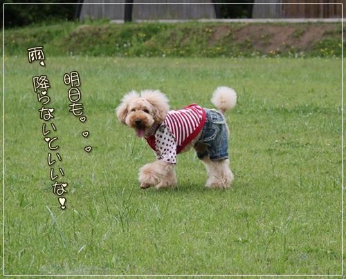 IMG_3904_20110529215509.jpg