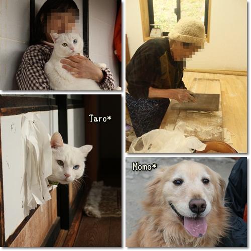 cats2_20111129225645.jpg