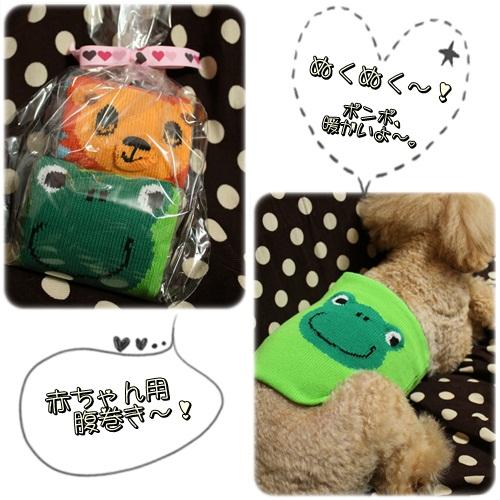 cats6_20120303231343.jpg