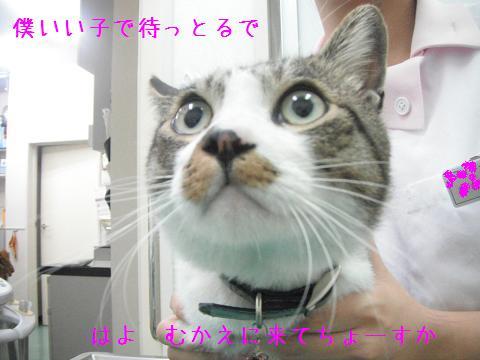 迷い猫さん