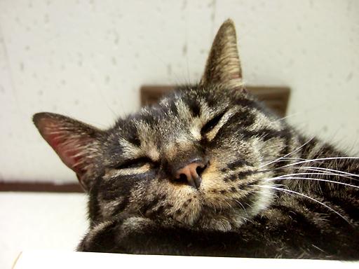 台所の食器棚の上で寝ているねぎ