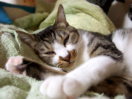 穏やかな寝ぼけ顔