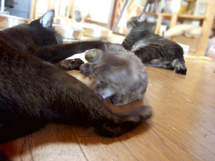 仔猫にはいつも優しく紳士的な対応のバジル