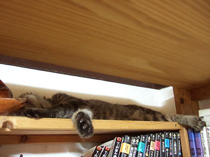どこにいるのか探したら、ここで寝てました