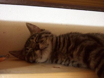 初めて撮ったレンの寝顔の記念写真♪