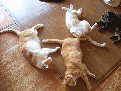 珍しく茶虎隊のメンバー揃ってお昼寝中