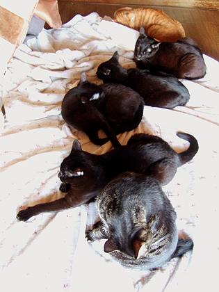 黒猫隊勢揃いの春バージョン