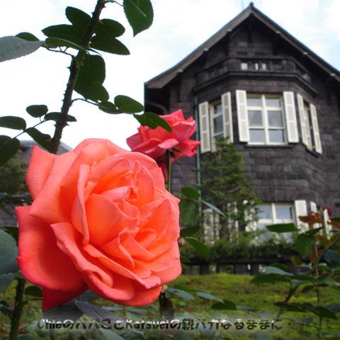 旧古河庭園の洋館と薔薇 2011-10-30