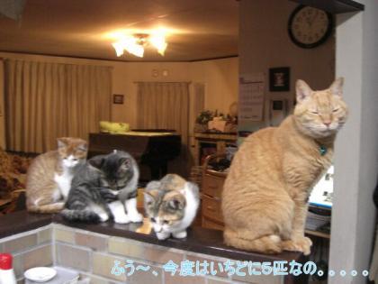 5ひきの子猫