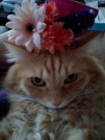 お花とブーちゃん