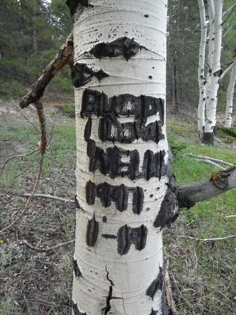 birch_tree2
