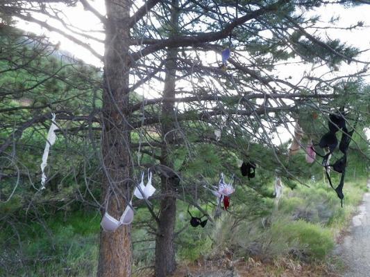 brassiere_tree1