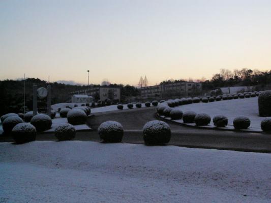 snowymorning3_20120126162638.jpg