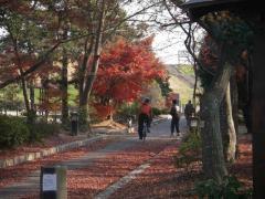 四季彩館紅葉