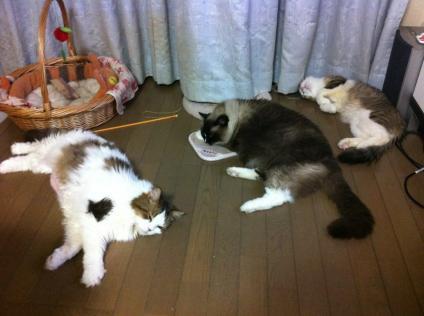 大猫トリオ