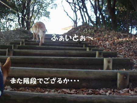 こんな階段が延々と続いています。
