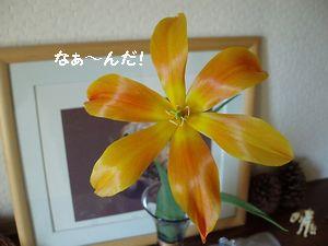 この花は私です。