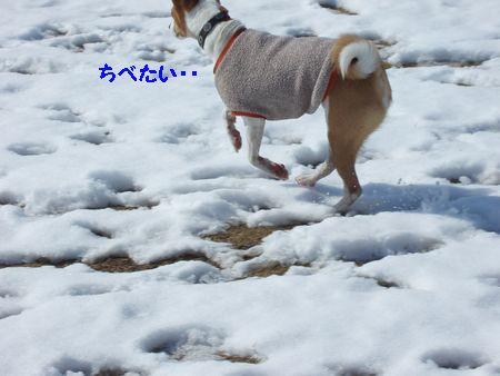 足先がまっかっかで冷たそう。