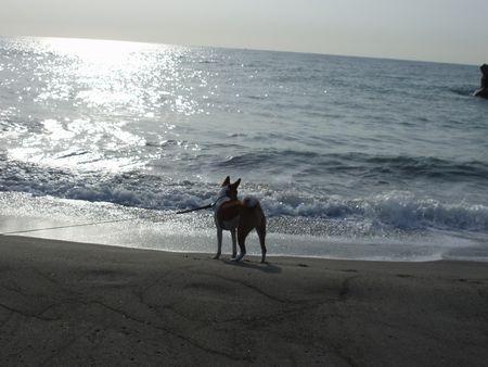 海に会う男になりたいケント君!