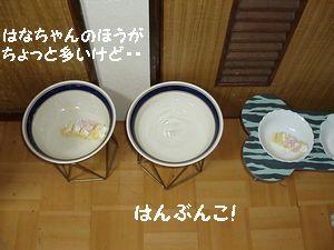 東海道の松ほどの歴史はないけど寂しいね。