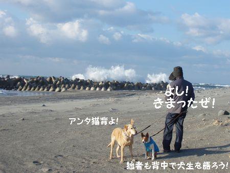 強風、波浪注意報!