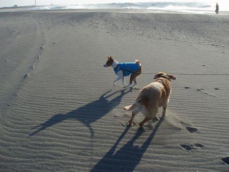 砂浜は楽しそうです。
