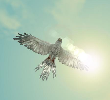 お日様高く、鳥さんぱたぱた。。。