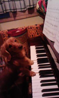 ケンピアノ
