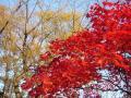 航空公園の紅葉