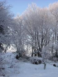 早朝の冬景色#1