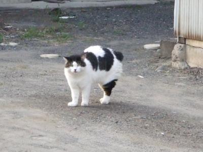 よその猫 6