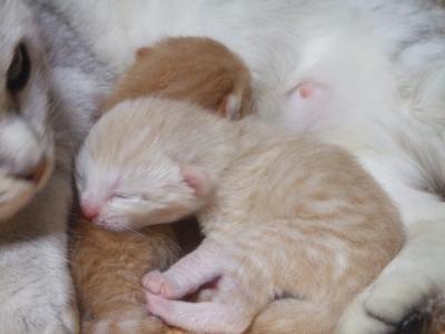 シーナと赤ちゃん
