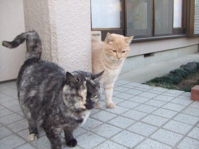 外猫 A10