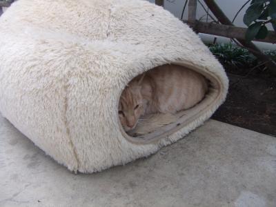 外猫 A15