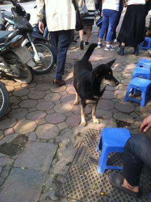 ベトナムの犬 1