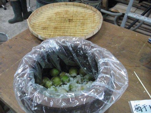 梅干し作り