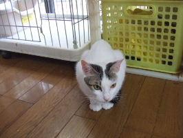 細女の子猫2