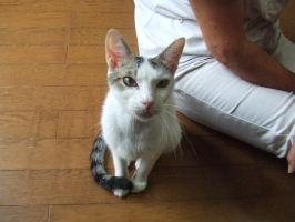 細女の子猫3