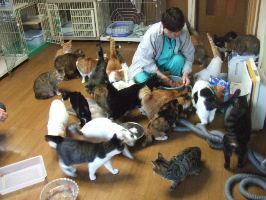キャッツママ亭の70匹の猫達