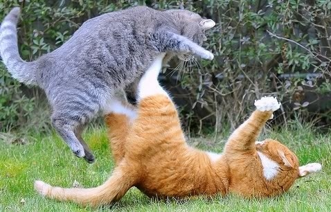 cat-in-fight_11.jpg