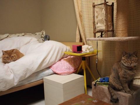(き)ここにいるのはきららと飼い主だけ                       (ミ)ここにいるのはミミとおばちゃんだけ