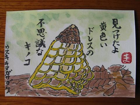 ウスキキヌガサタケ