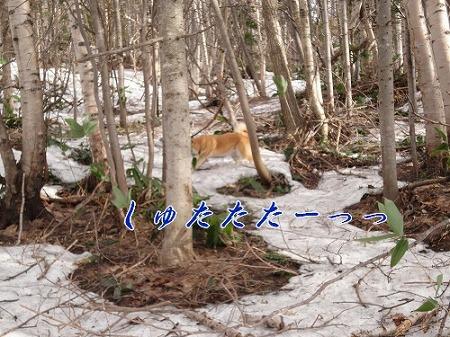 kunoithi_20110420100615.jpg