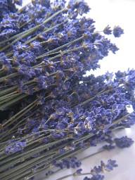lavenderfurano.jpg