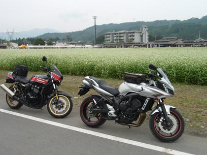 そばの花とバイク